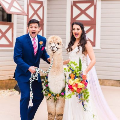Check Us Out in Heart of NC Weddings… There are Alpacas 🦙